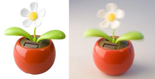 """""""Samba"""" Tanzende Blume"""